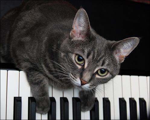 día mundial del gato